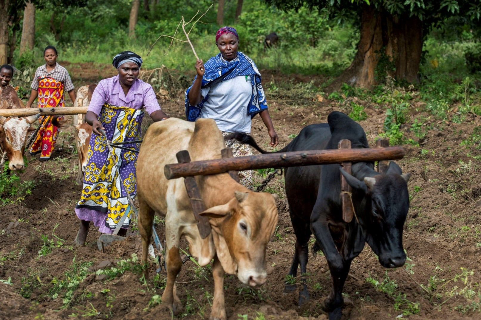 Gender and Land Rights Measurement Brief